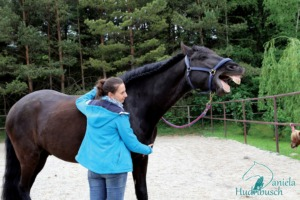 Masterson Bodywork für Pferde